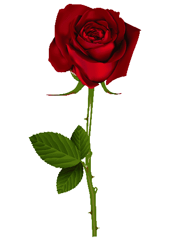 png-clipart-roses-red-rose-thumbnail.png